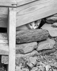 Fraidy Cat